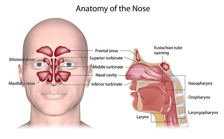 Sinusitis Pressure Relief In Cleveland , OH - Cleveland  Acupuncture Clinic